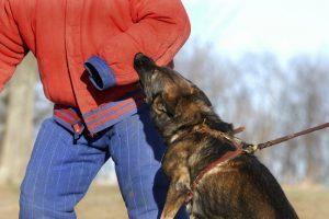Elias & Elias Tulsa Personal Injury Attorneys dog bites